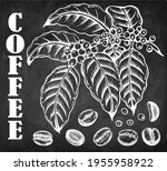 chalk drawing coffee tree with... | Shutterstock .eps vector #1955958922