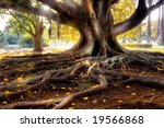 Centenarian Tree With Large...
