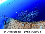 Small photo of Fish shoal at coral reef barrier underwater. Diving underwater. Underwater divers