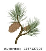 cedar branch with a cone vector ... | Shutterstock .eps vector #1957127308