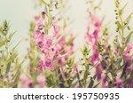 antirrhinum majus or... | Shutterstock . vector #195750935