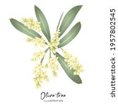 blooming olive tree branch ... | Shutterstock . vector #1957802545