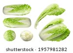 whole chinese cabbage  napa or... | Shutterstock .eps vector #1957981282