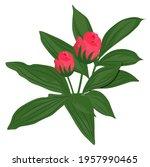 peony vector stock illustration.... | Shutterstock .eps vector #1957990465