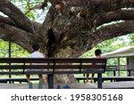 Back view brother and yong brother sitting under big Giant Monky Pod Tree