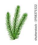 winter evergreen fir branch... | Shutterstock .eps vector #1958371522