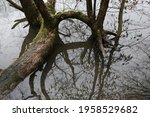 Bare Tree With Branches....