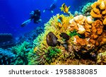 Small photo of Diving at coral reef underwater. Underwater diving scene. Divers underwater