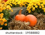 A Fall Still Life With Mums An...