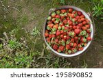 wild natural red strawberries ... | Shutterstock . vector #195890852