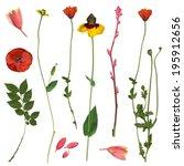 spring flower frame. real... | Shutterstock . vector #195912656