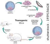 illustration of genetic... | Shutterstock .eps vector #1959156628