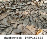Fallen Dry Leaves On The Jungle ...