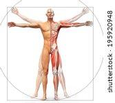 Human Anatomy Displayed As The...