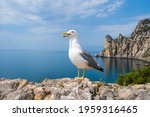 Seagull On The Background Of...