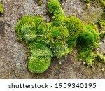 Landscape Green Beauty Paddy...