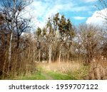 park view with trees and blue...   Shutterstock . vector #1959707122