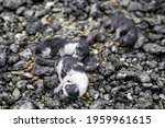 Dead Puppy Cats Abandoned In...