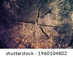 tree rings old weathered wood... | Shutterstock . vector #1960104802
