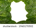 Frame Of Organic Spinach Leaves ...