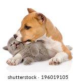 Stafford Puppy Kissing Kitten....