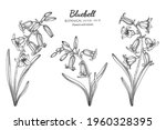 bluebell flower and leaf hand... | Shutterstock .eps vector #1960328395