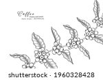 coffee flower and leaf hand... | Shutterstock .eps vector #1960328428