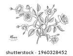 roses flower and leaf hand... | Shutterstock .eps vector #1960328452