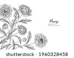 peony flower and leaf hand... | Shutterstock .eps vector #1960328458