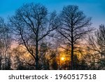 Bare Tall Trees At Dusk With...