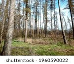 view of the pine trees with sky ...   Shutterstock . vector #1960590022