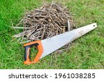 Stacks Of Firewood And Saw On...