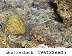 Rocks And Corals In Sea Water