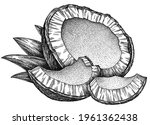 Engrave Isolated Coconut Hand...