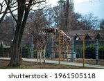 two beautiful giraffe is huging ...   Shutterstock . vector #1961505118