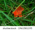 Autumn Leaf In The Tall Grass