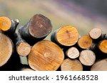 Woodpile Fresh Cut Pine Logs At ...