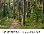 Path Through Sunny Autumnal...