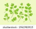 Set Of Parsley Or Cilantro Herb ...