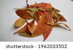 A Pile Of Red Brown Leaves On...