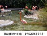A Beautiful Flamingo Standing...