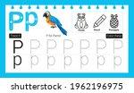 educational alphabet p tracing...