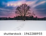 Lonely Tree Silhouette In...