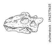 Teriodont Fossilized Skull Hand ...