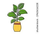 rubber plant sketch. indoor... | Shutterstock .eps vector #1962616228