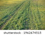 track on a green meadow. rural... | Shutterstock . vector #1962674515