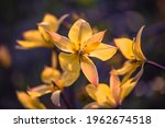 beautiful flowers close up on... | Shutterstock . vector #1962674518