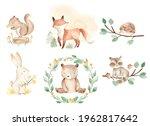 Woodland Baby Animals...
