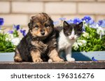Stock photo little kitten with puppy outdoors 196316276