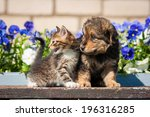 Stock photo little kitten with puppy outdoors 196316285